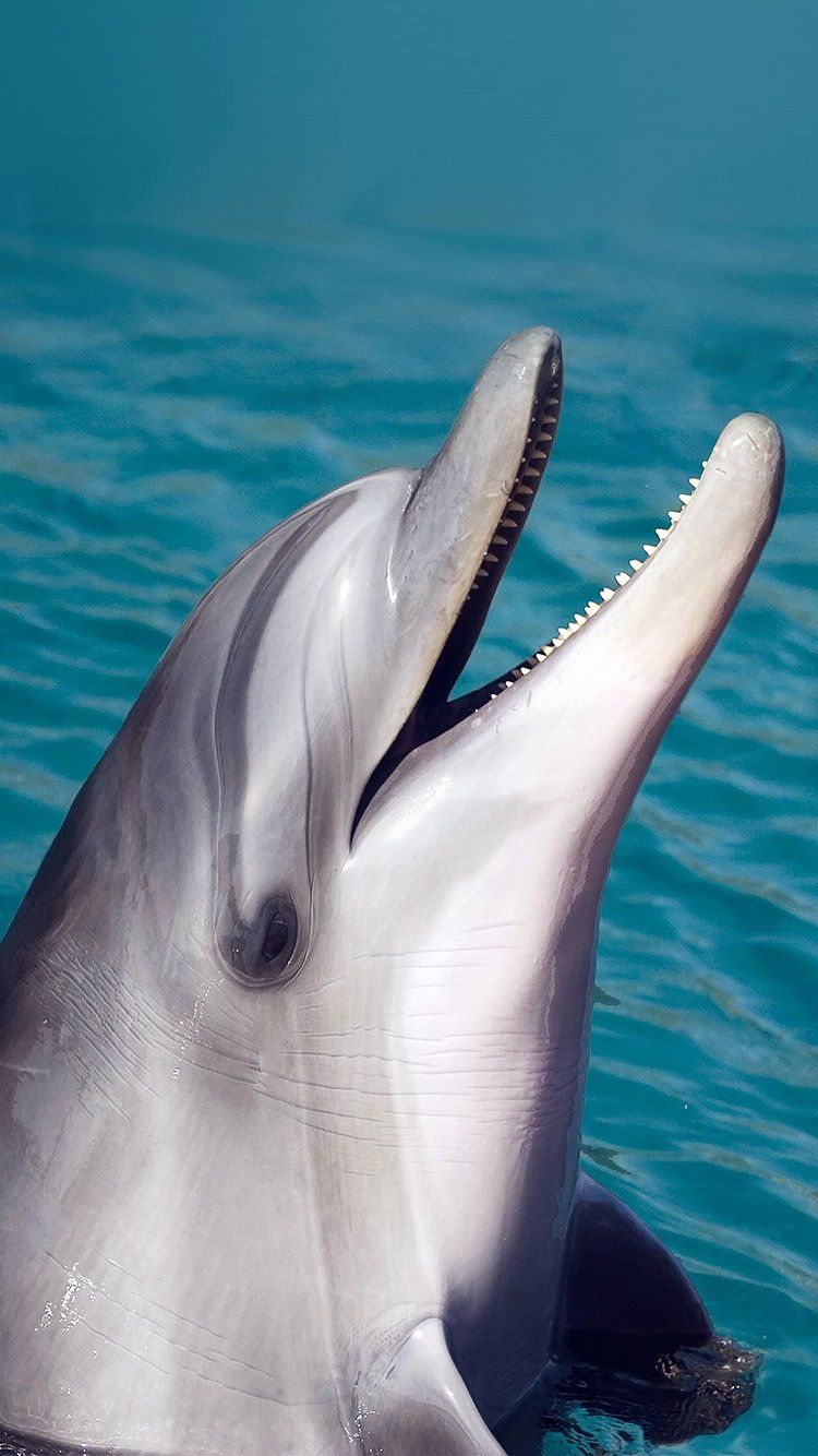 DOLPHIN SEA ANIMAL CUTE WALLPAPER HD IPHONE (With images