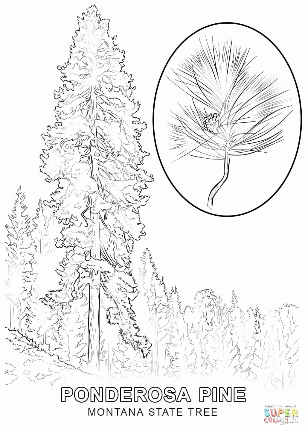 Alaska State Bird Coloring Page Luxury Nevada State Bird Tree