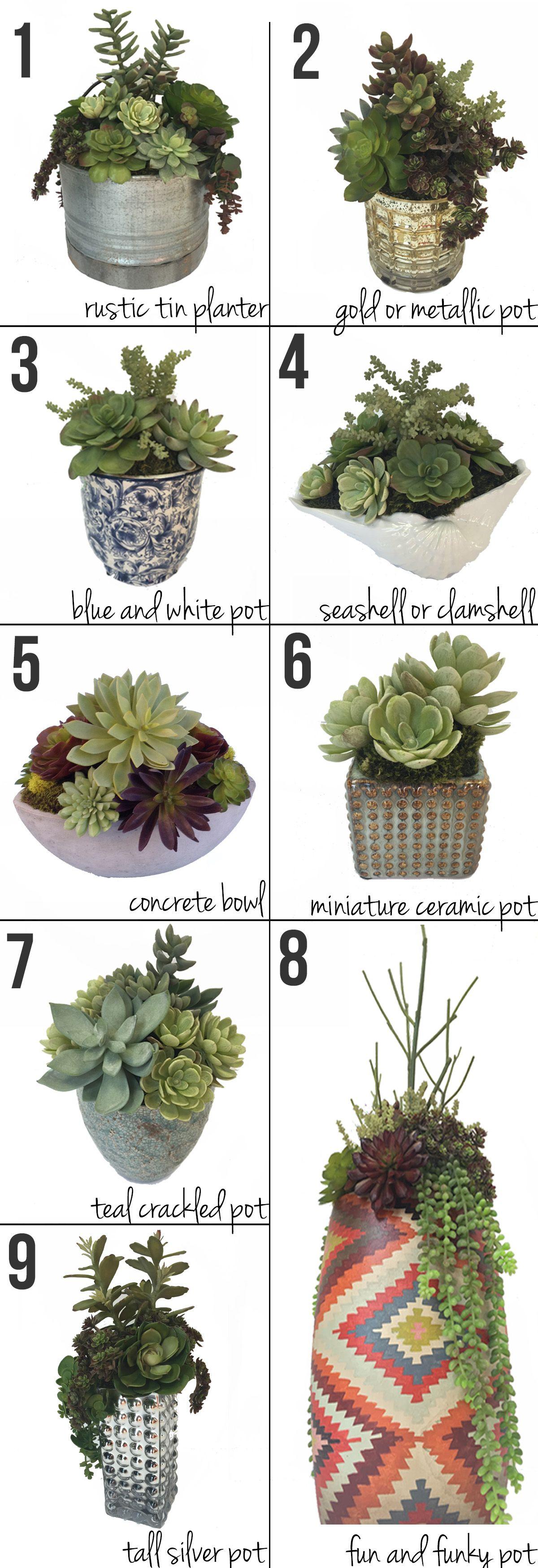 Succulent City!   Succulents, Types of succulents, Plants
