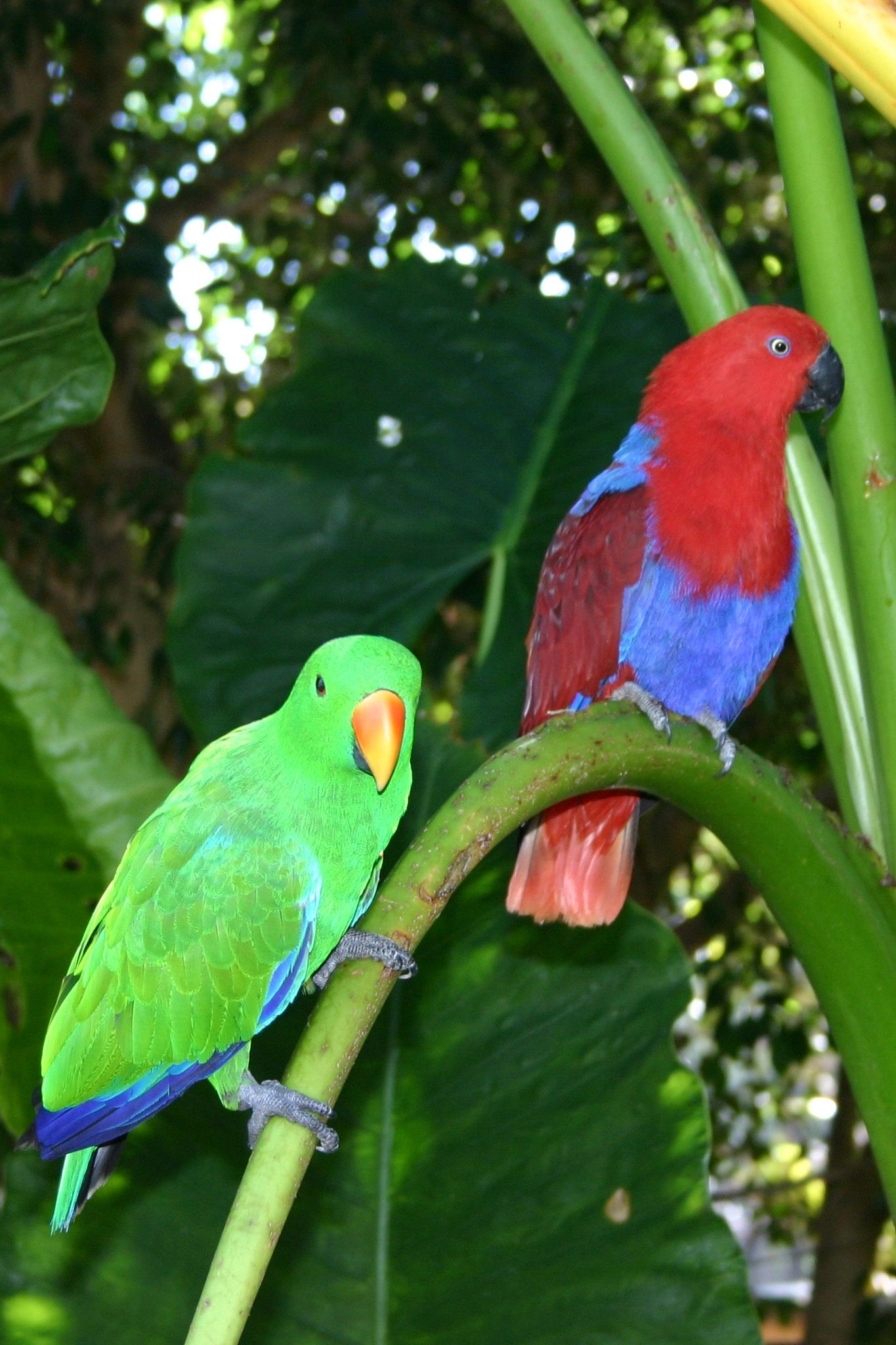 Daintree Rainforest, Australia Australian birds