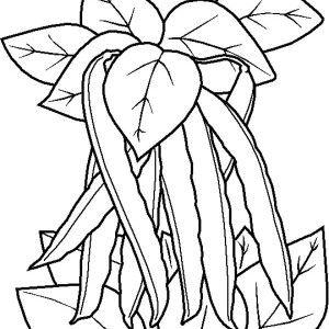 Green Bean Illustration Illustration Greenbeans Vegetable