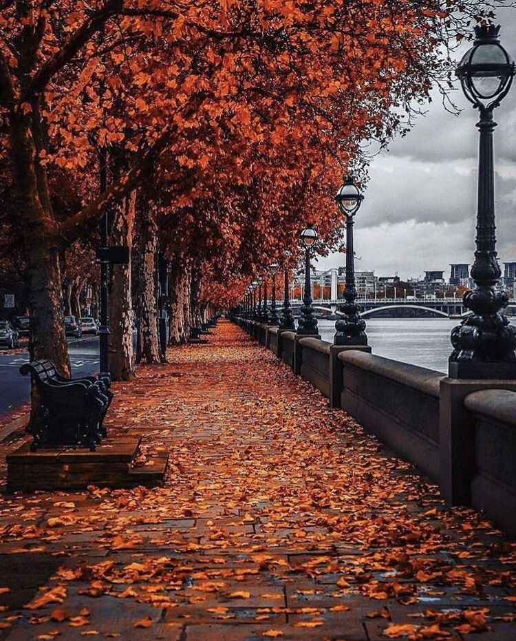 Autumn  shared by Naz on We Heart It