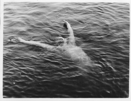 floriental:  Baltic soldier swimming