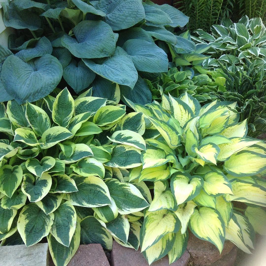 top 5 des plantes et fleurs les plus faciles d 39 entretien plantes jardins fleurs et plante. Black Bedroom Furniture Sets. Home Design Ideas