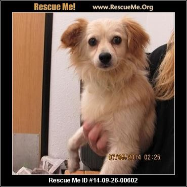 Ohio Maltese Rescue Adoptions Rescueme Org Maltese Maltese Dogs Post Animal