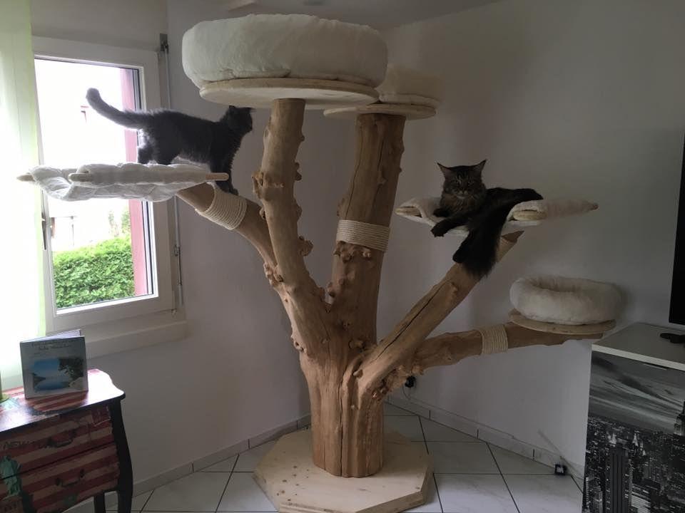maine coon world naturkratzb ume katzenm bel pinterest katzen kratzbaum und katzenkratzbaum. Black Bedroom Furniture Sets. Home Design Ideas