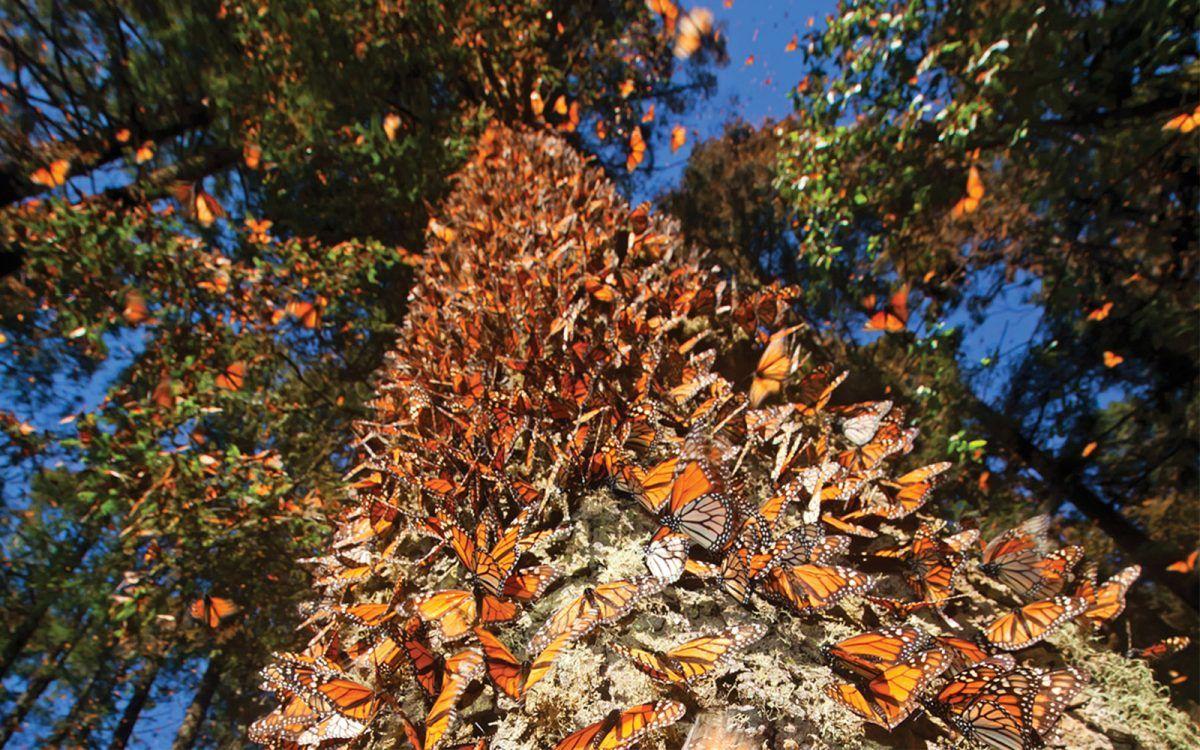 Qué más hacer si vas a visitar a la Mariposa Monarca en