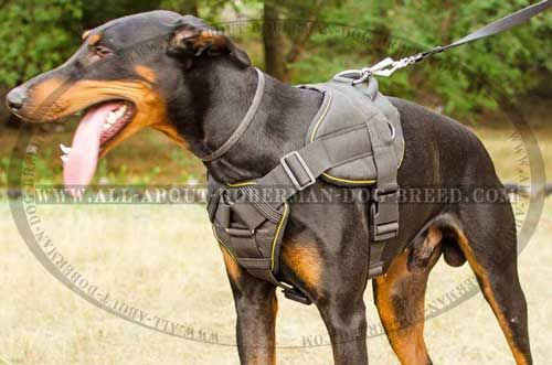 Pin On Doberman Dog Harnesses