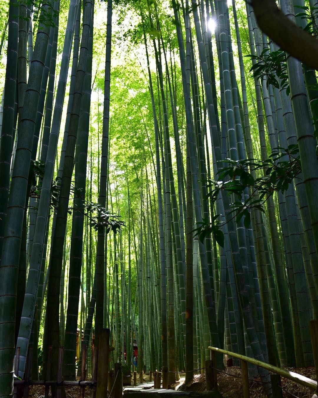 We Are Posting This Shot From Hōkokuj Ji Temple In Kamakura It Is