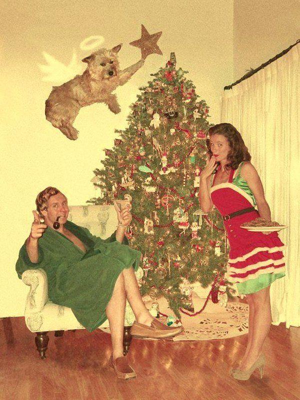 funny christmas card - angel dog