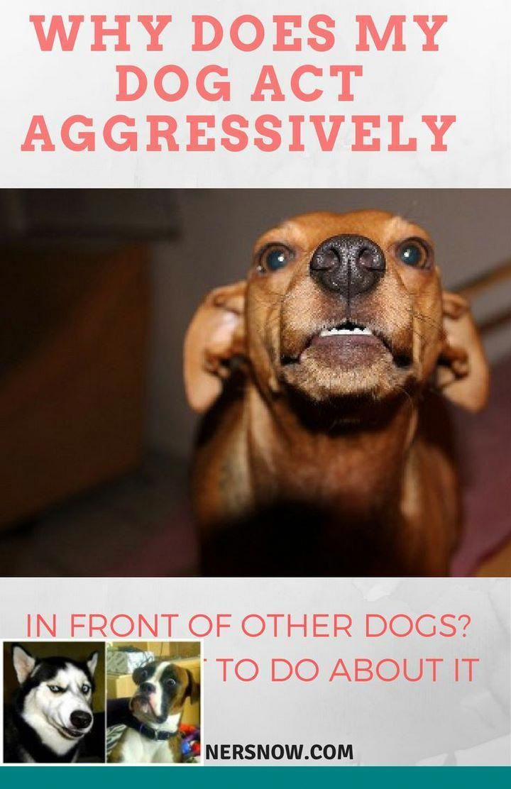 How To Deal With Aggressive Dog Behavior Problems