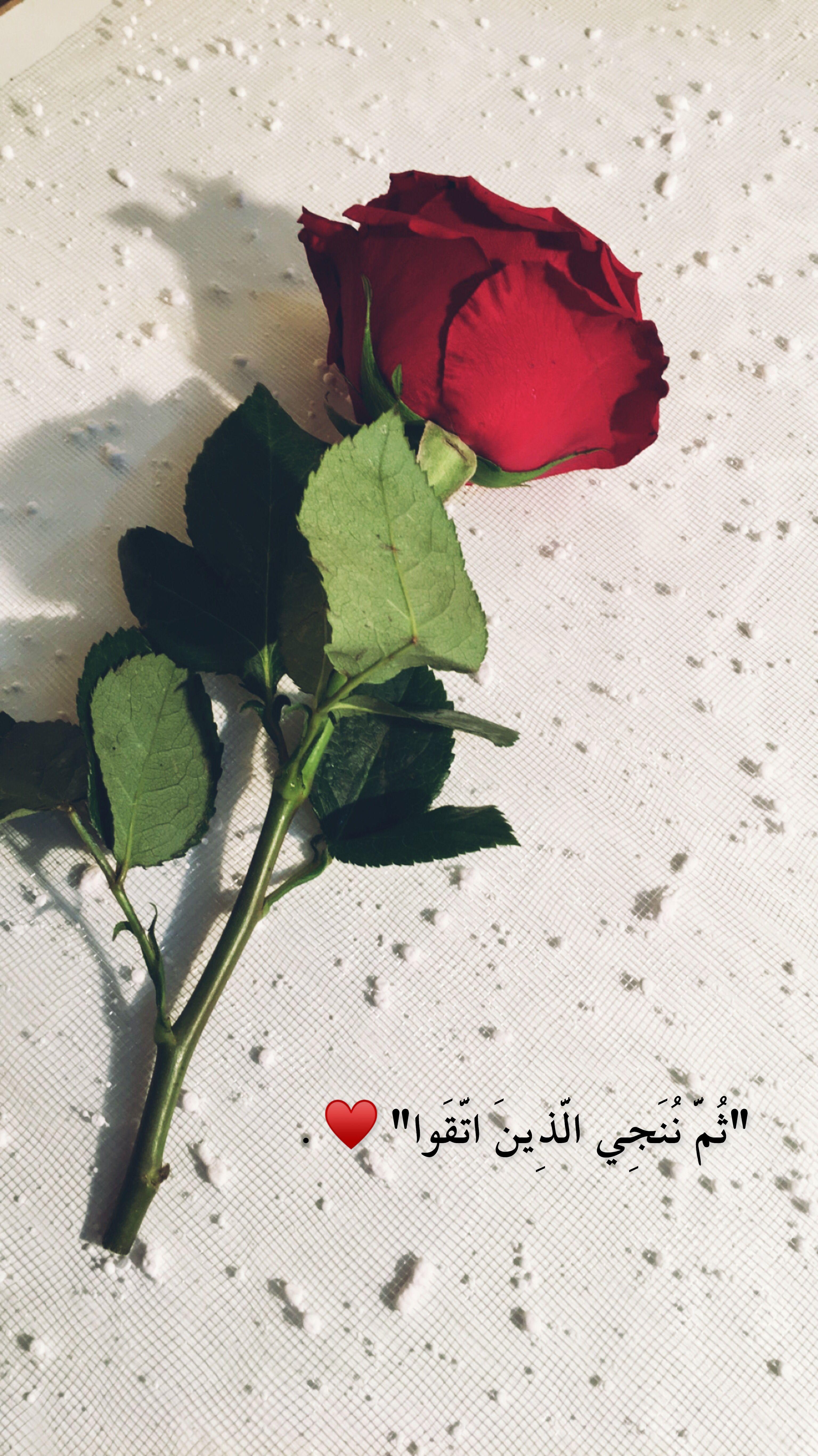 Snap Aissha111 سنابيات قهوتي صباح الخير يارب سنابي سنابك تصوير Beautiful Arabic Words Cover Photo Quotes Arabic Love Quotes