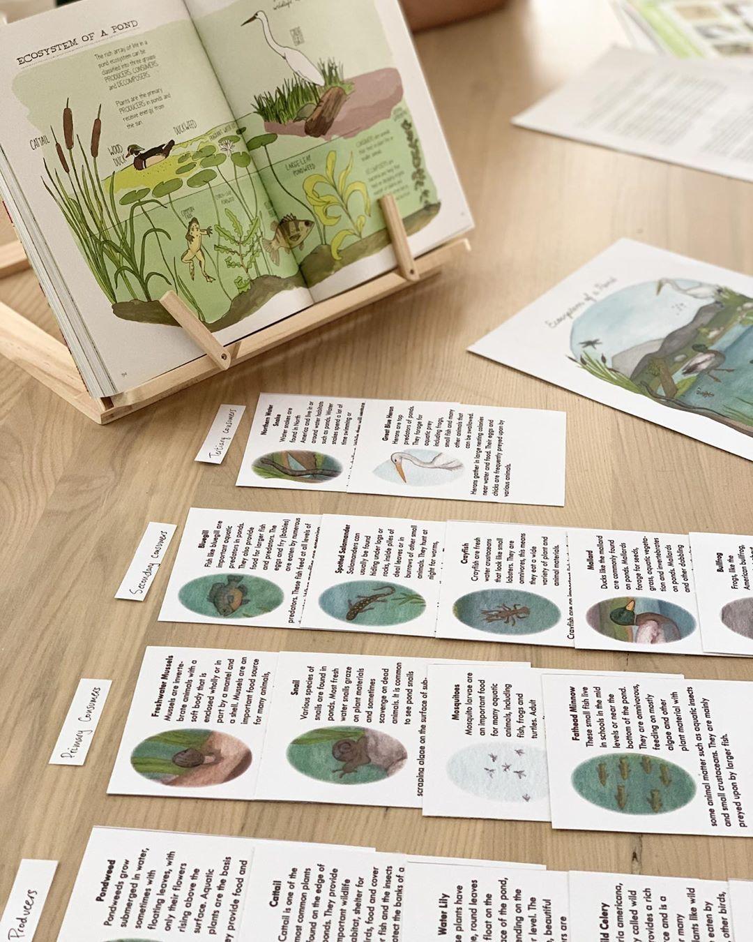 Pond Science Habitat Study Wild Nature Unit In