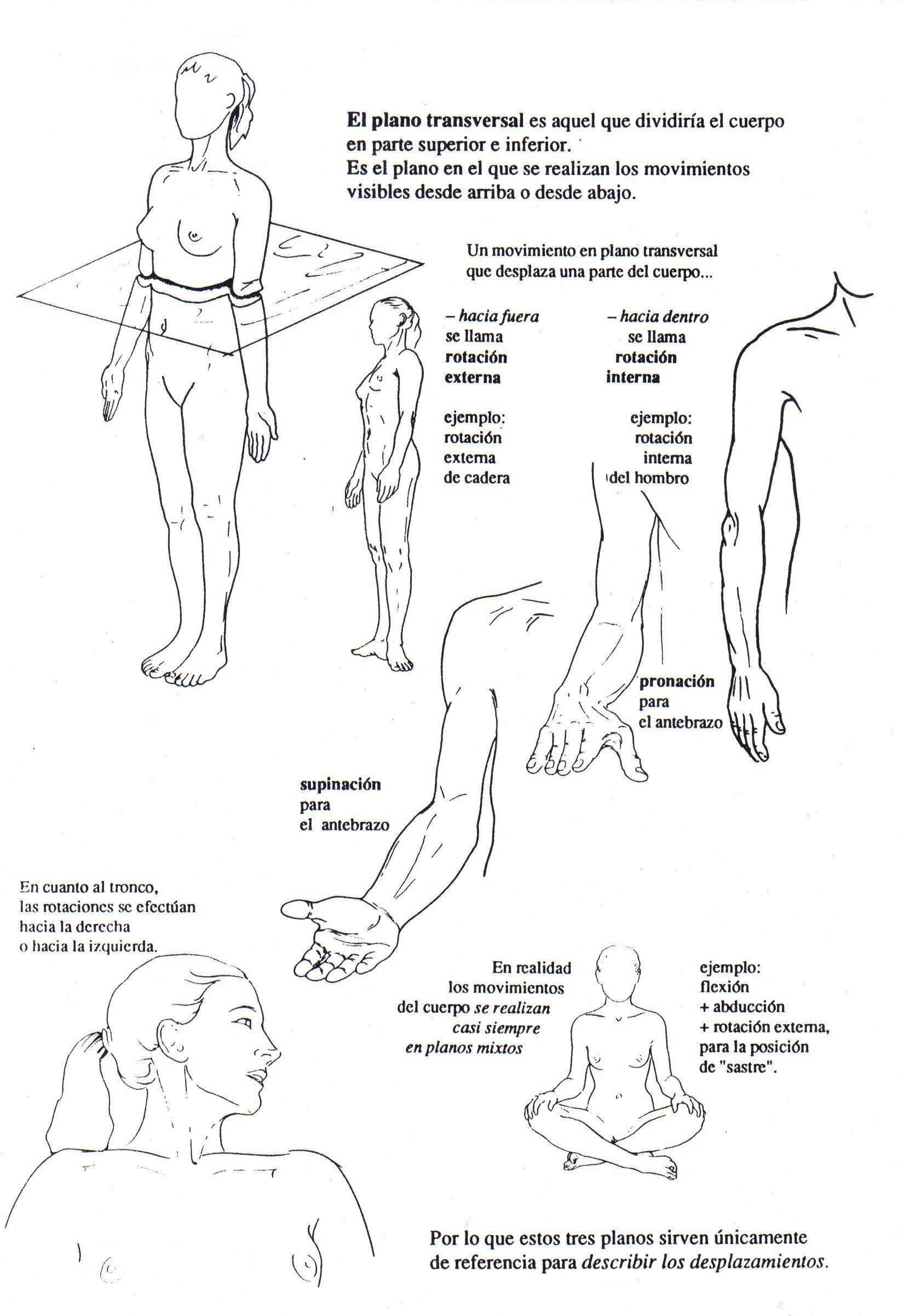 Planos del cuerpo | Anatomia | Pinterest | El cuerpo, Planos y Cuerpo
