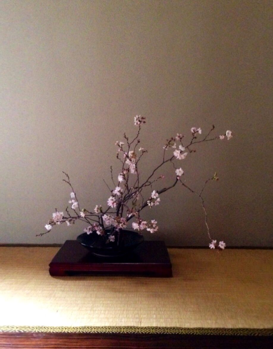 Winter Cherry Blossom Ikebana Japanese Tradition Flower Ikebana Japanese Culture Flowers