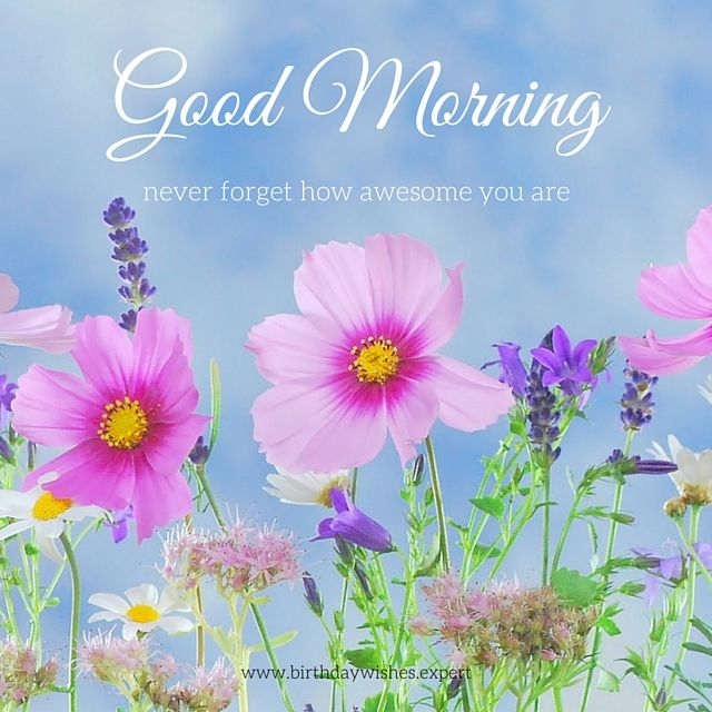 60 Good Morning Images with Beautiful Flowers [Updated