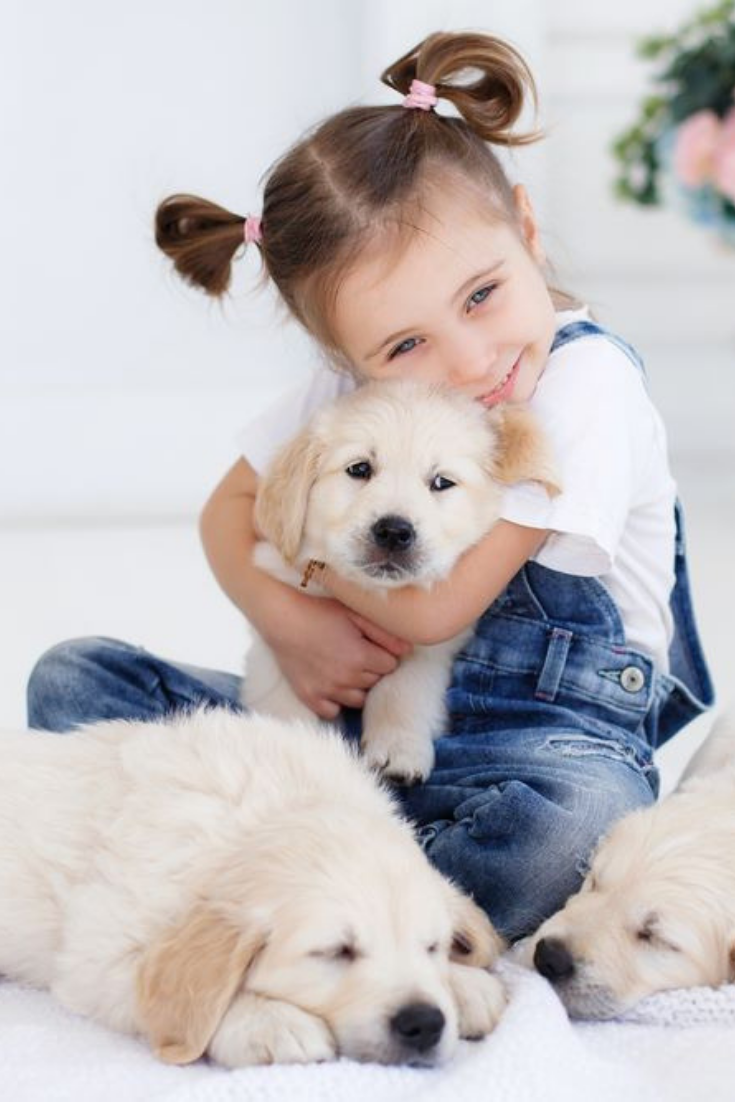 Child With Little Dogs Playing At Home Girl With Puppies Child With Puppy Kissing Hugging Playing In Room Golden In 2020 Golden Retriever Labrador Retriever Dogs