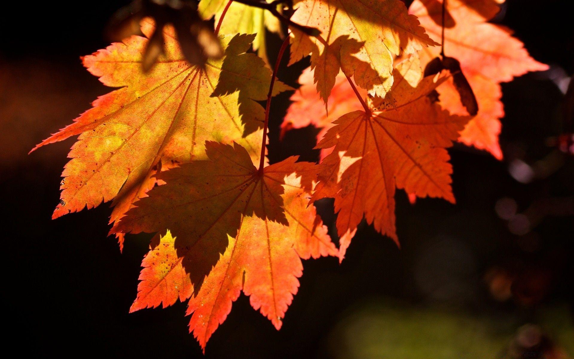 Красивые картинки осень для рабочего стола