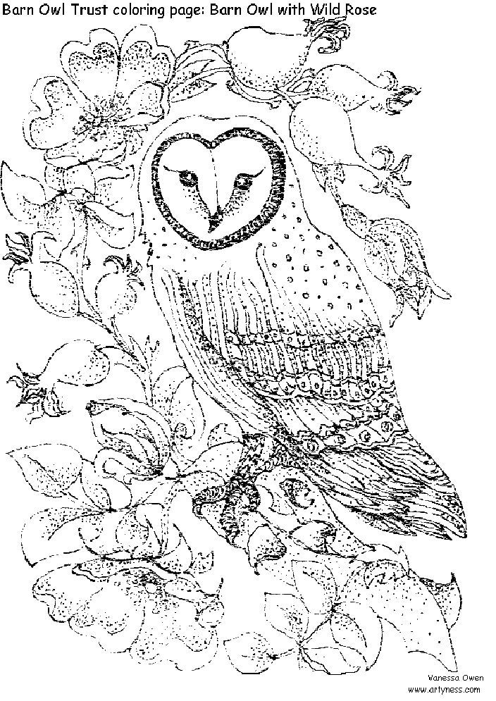 intricate coloring pages for adults the barn owl trust barn owl colouring pages