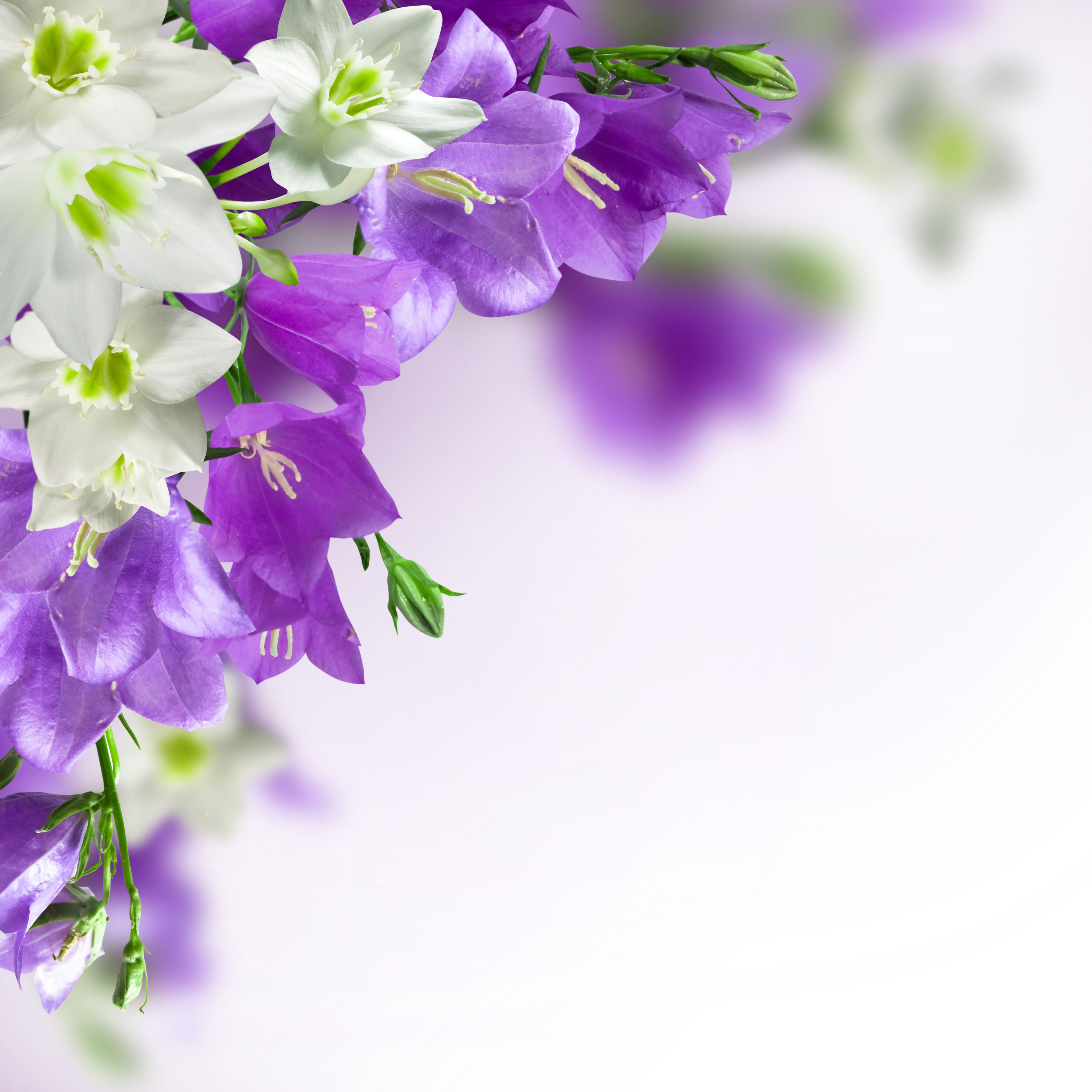 Spring Background With White And Purple Flowers