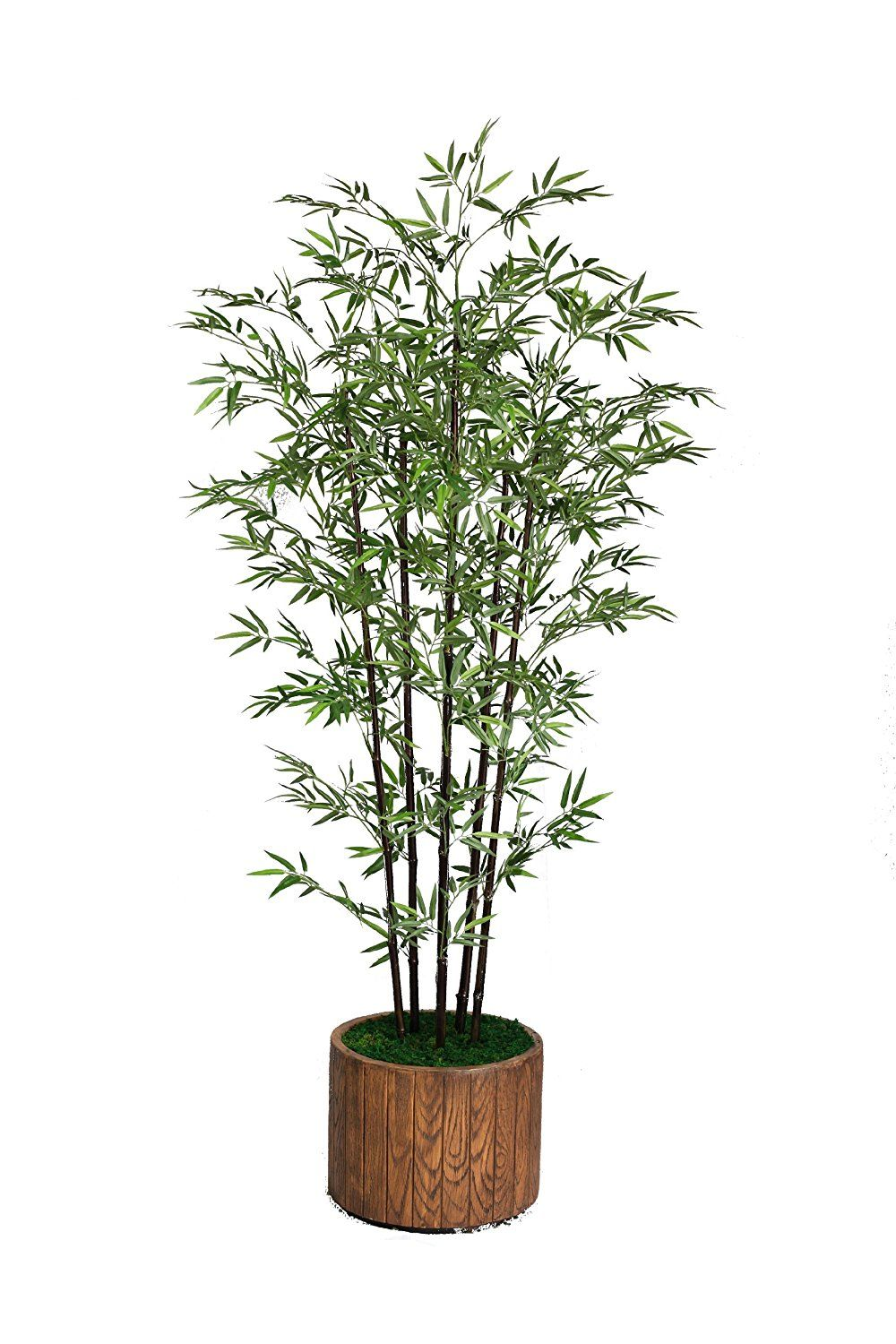 Laura Ashley 77 Inch Tall Banana Tree with Real Touch Leaves in 16 Inch Fiberstone Planter *** Learn more by visiting the image link.