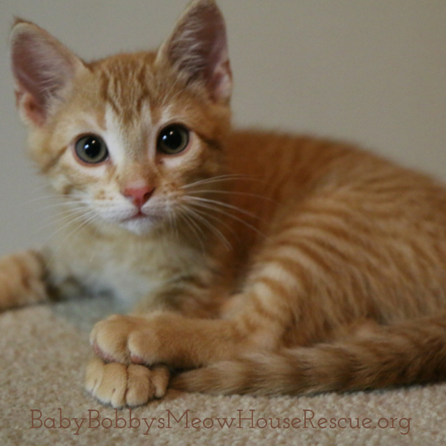 Cat Rescue Orange Kitten Kittens Petadoption Cute Cats And Kittens Images Of Cute Cats Kittens Cutest