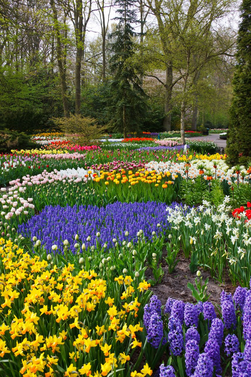 Colorful Flower Garden Free Stock Photo Flower Garden Pictures
