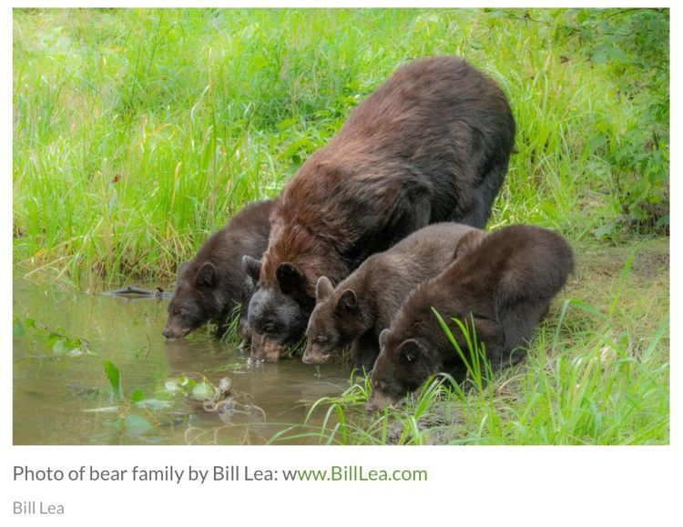 POLL: Should bear hunting in New Jersey be banned