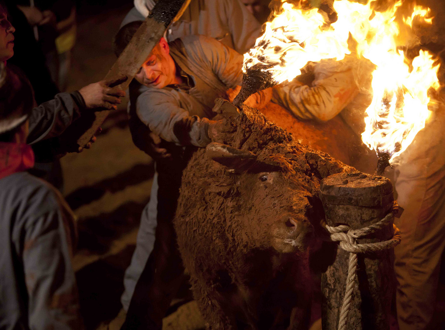 El Toro Jubilo or 'bull on fire' is celebrated each year in November in Medinacelli, Spain.Please sign /share the petition on the bottom of article!