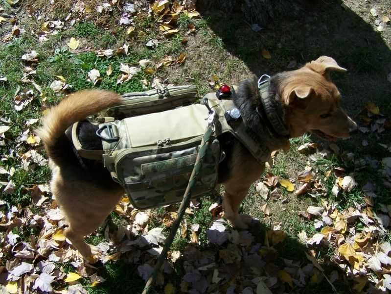 Tactical Dog Harness | MILITARY K9 / HANDLERS | Pinterest | Dogs ...