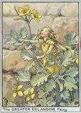 Greater Celandine Fairy