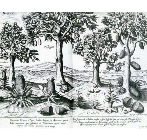 East Urban Home Poster Tropical Fruit Trees 1596 by Johannes Baptista Van Doetechum the Younger graphic print  baptista