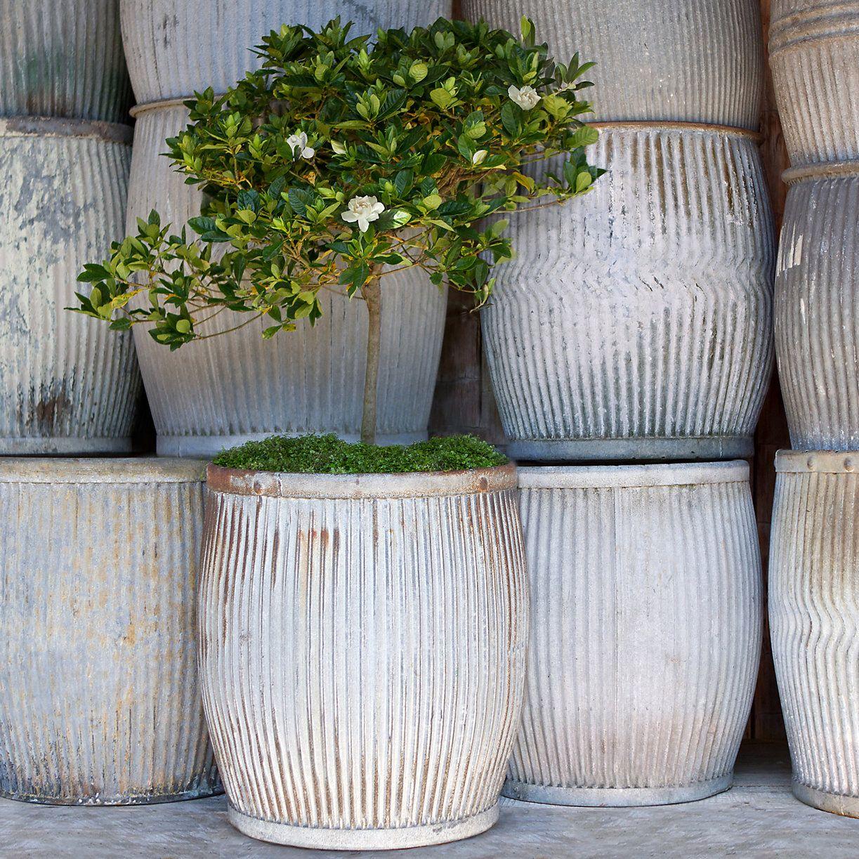 Large Garden Pots For Trees Part - 23: Indoor Lemon Tree · Vintage Zinc Barrel In Gardening PLANTERS Outdoor  Planters Large ...