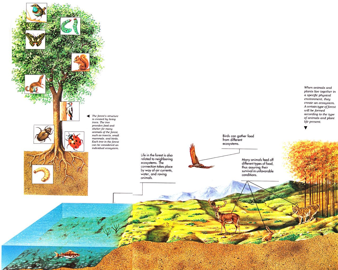 Ecosystem diagram ecosystem largeg ecosystems systems ecosystem diagram ecosystem largeg pooptronica Image collections