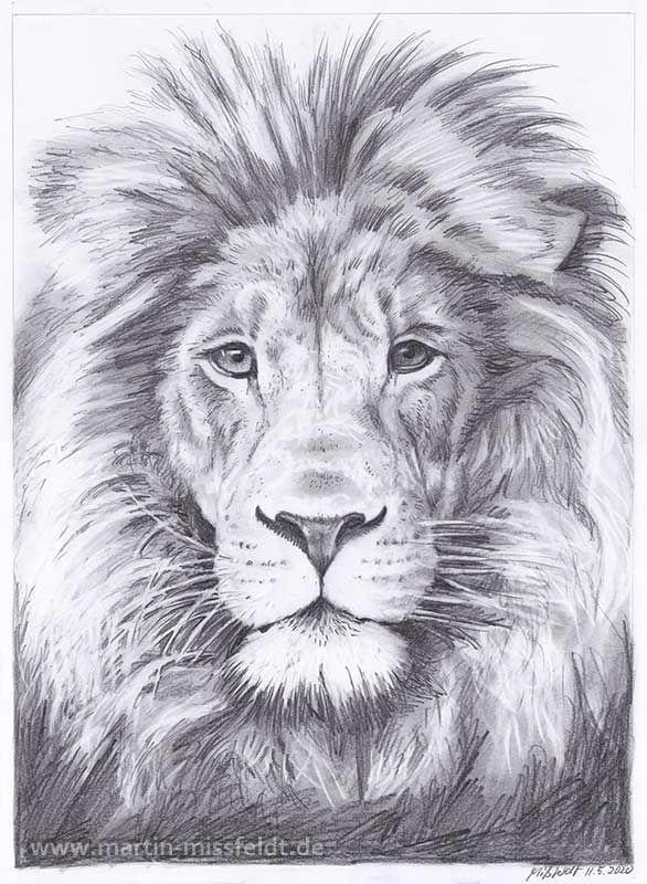 Bleistiftzeichnung eines Löwenkopfes, realistisch Zeichnen, Löwe