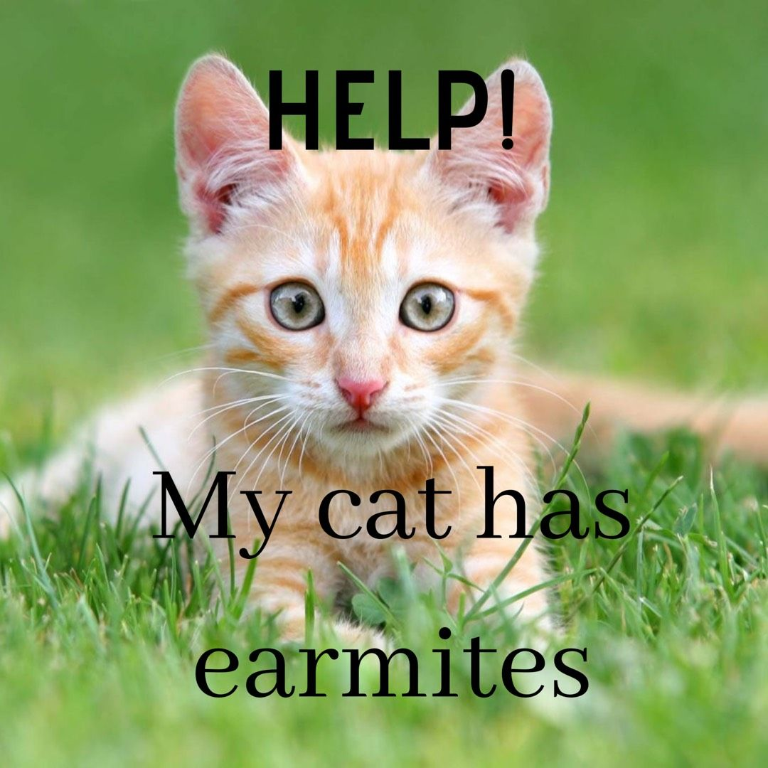 Help My Cat Has Ear Mites Cats Kitten Adoption Dog Care Diy