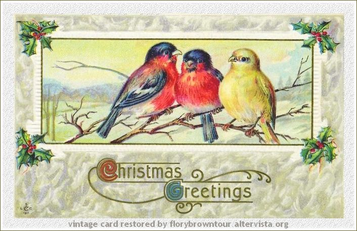 Auguri di Buon Natale  -  Christmas Birds
