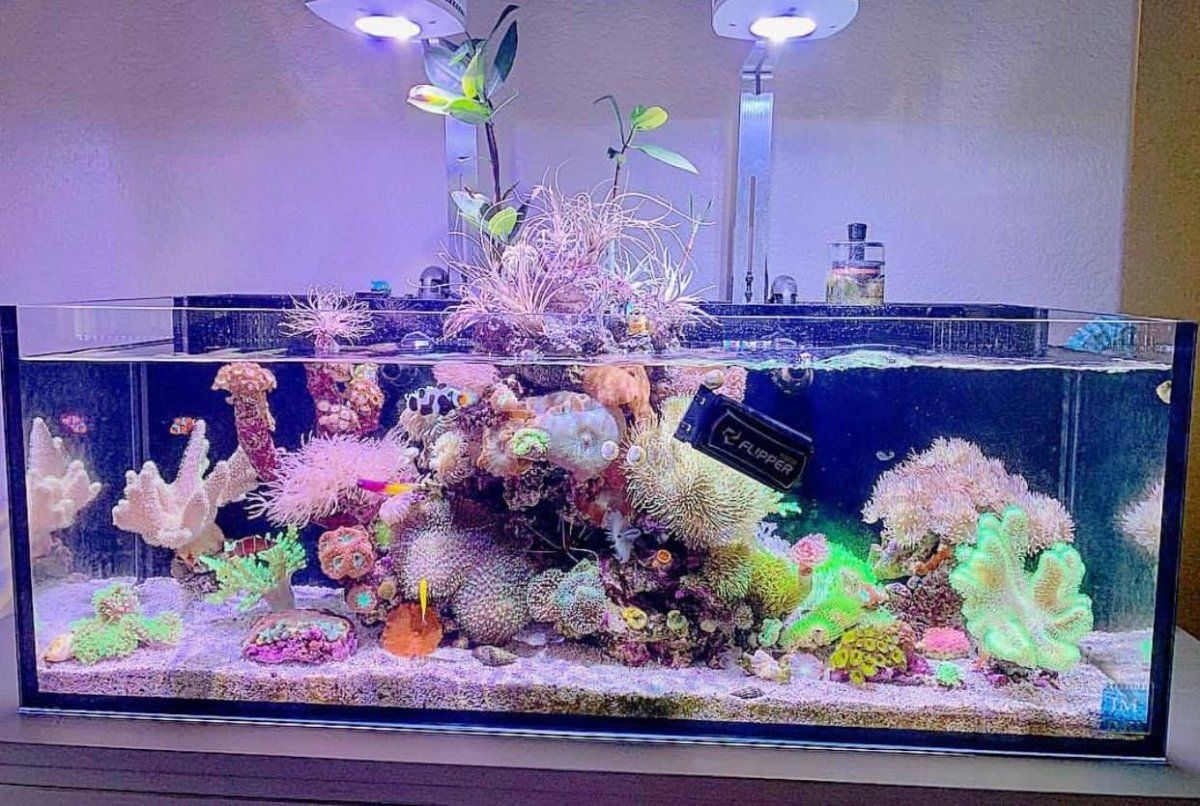 Plants Above The Water Line And A Reef You Don T Want To Miss Reef2reef Saltwater And Reef Aquarium Forum Saltwater Fish Tanks Cool Tanks Reef Tank