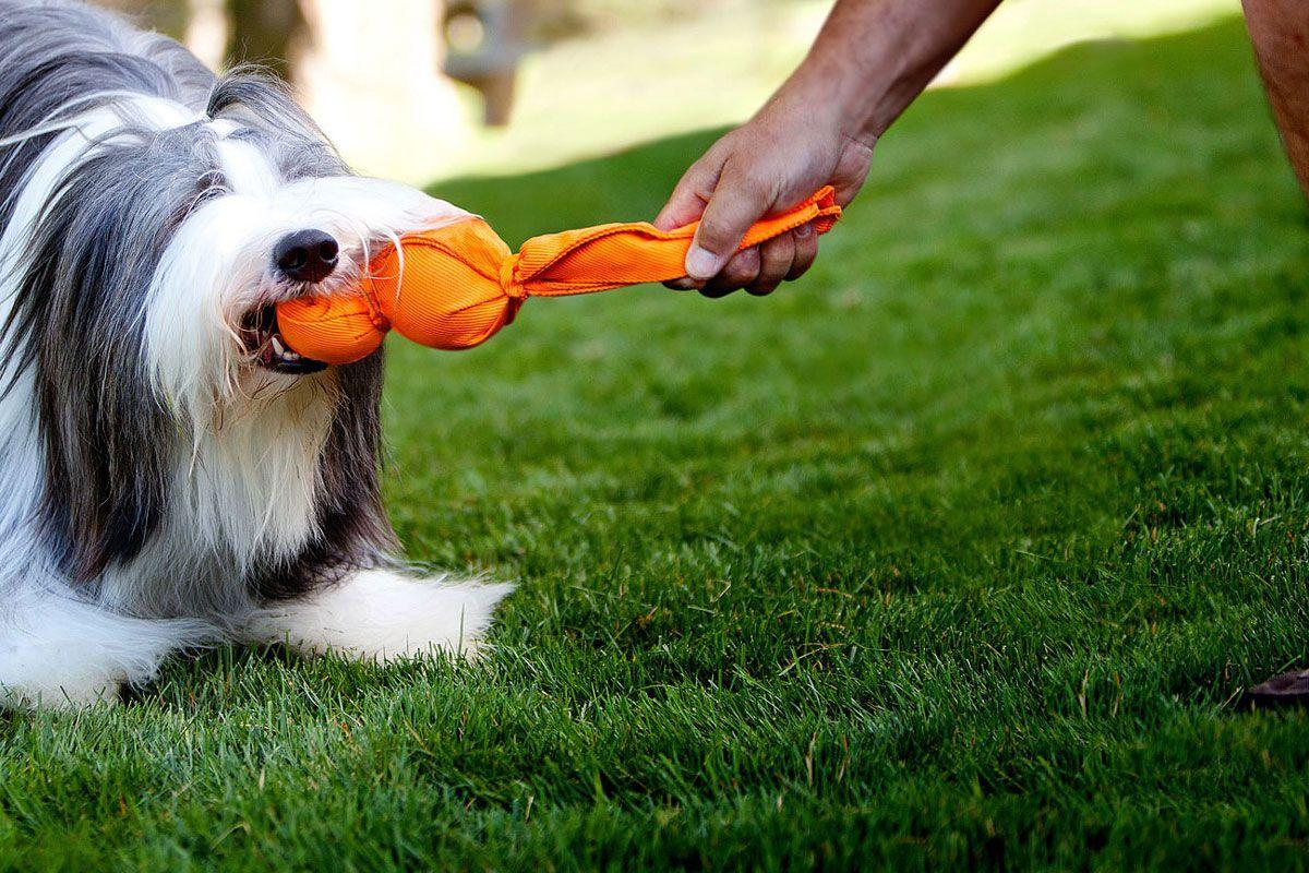 Teaching a reliable drop cue dogsactually ballistics