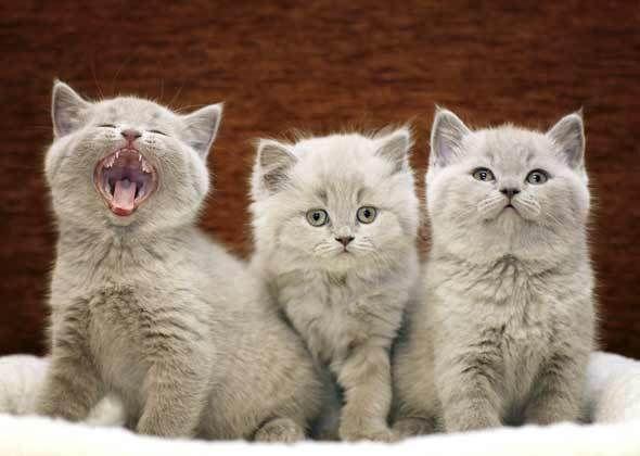 The most popular kitten name of 2014 is... Kitten names