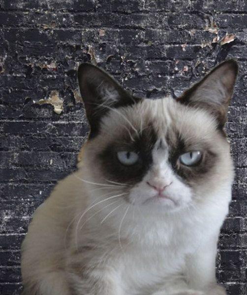 Grumpy Cat Grumpy Cat Grumpy Cat Quotes Cats