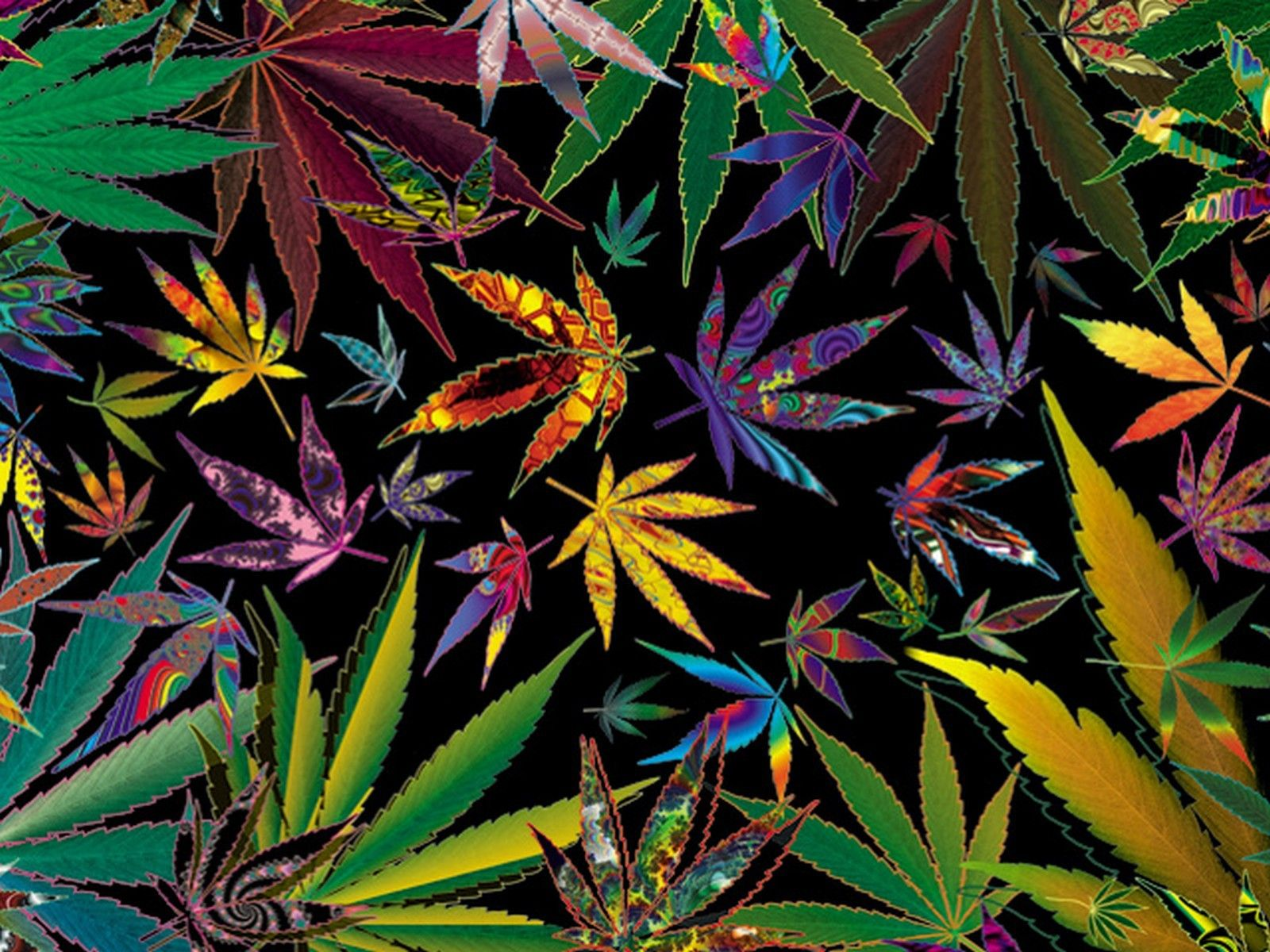 Trippy Multi Pot Leaves Cool backgrounds, Beautiful and