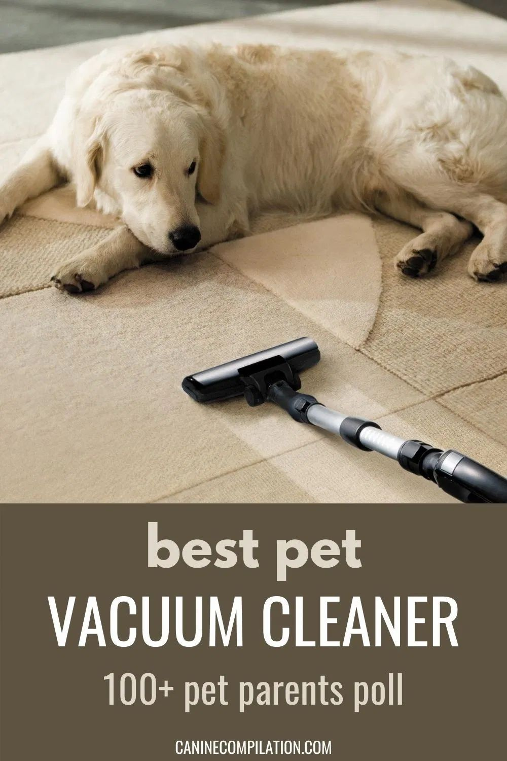 Best UK Vacuum Cleaner For Dogs canine compilation in