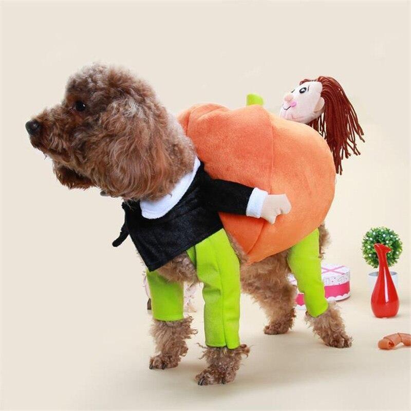 Funny Teddy Pet Dog Lift Pumpkin Turned Villain Hold A Santa Suit
