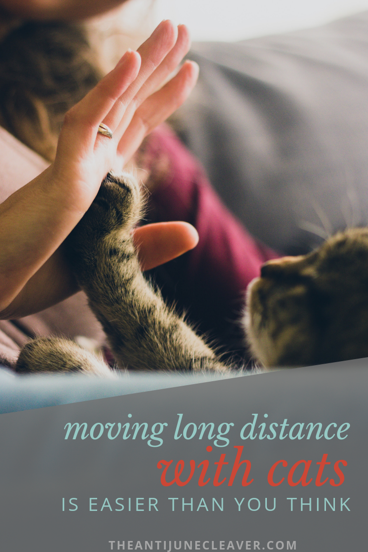 Moving Long Distance With Cats Is Easier Than You Think With Images Cat Quotes Emotional Support Animal Emotional Support