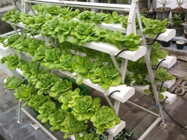 17 Best 1000 images about Garden BIG Hydroponics aeroponics and