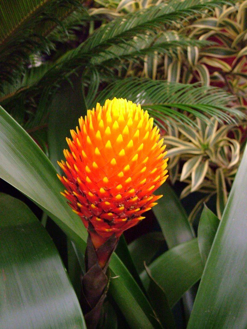 Tropical Rainforest Plants | Tropical Rain Forest | Pinterest ...