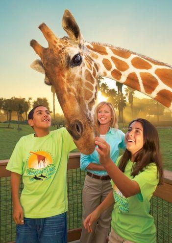 7 Reasons To Send Your Kids To Busch Gardens Camps Busch Gardens