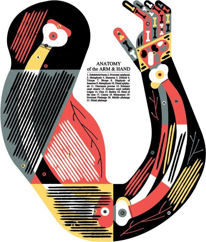 by Raymond Biesinger | Illustrate | Pinterest | Anatomie, Anatomie ...