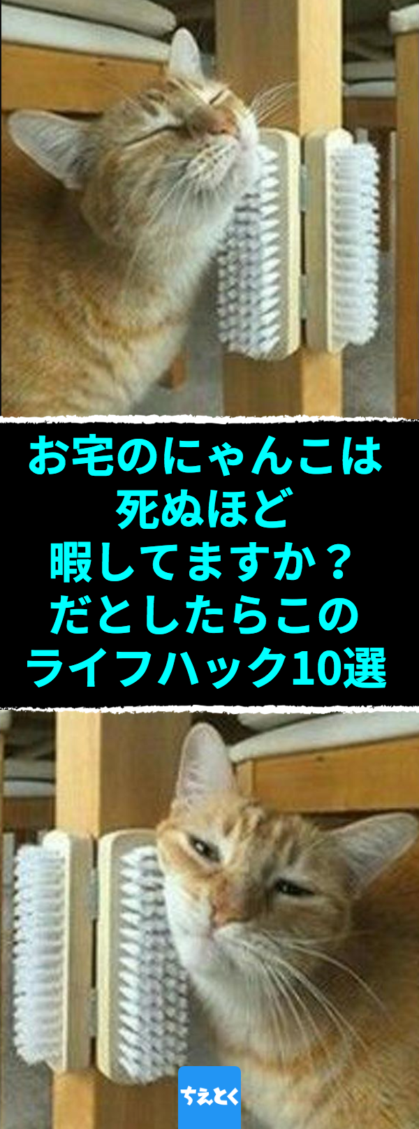 あなたのニャンコは死ぬほど暇してますか だとしたらこのライフハック10選 にゃんこひとり遊び用 これで留守番中も快適な手作りおもちゃアイディア 猫 おもちゃ 猫 おもちゃ 手作り 猫 おもしろ 猫 留守番 ひとり遊び 猫 ブラッシング ちえとく 猫 遊び 猫